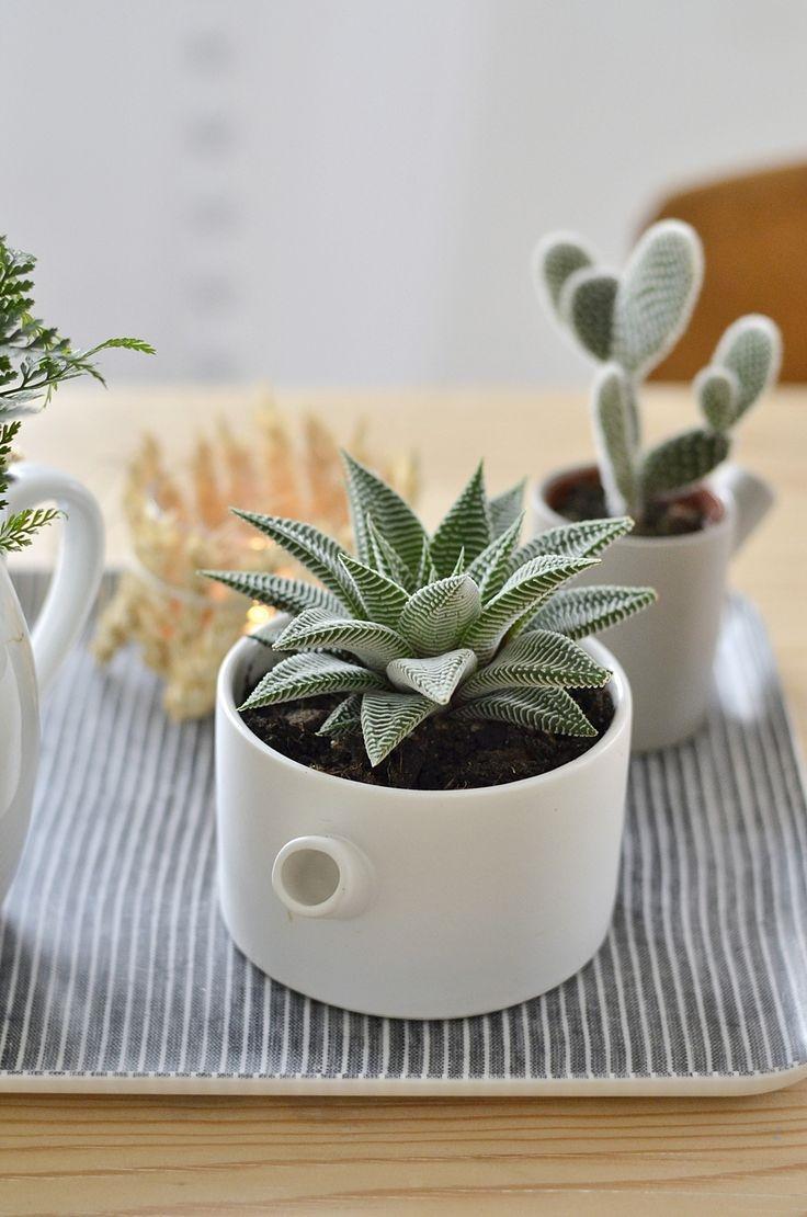 pianta di aloe