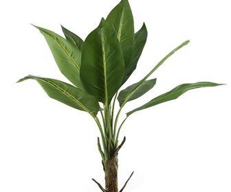 Domande e Risposte piante appartamento