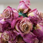 rose secche