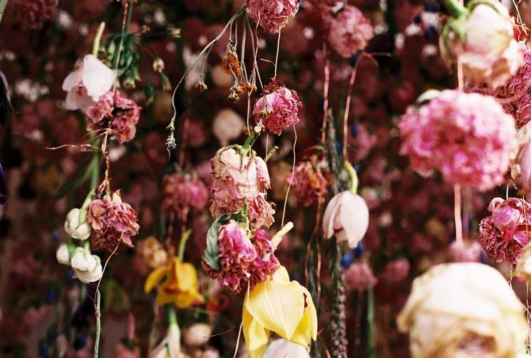 tecniche essicazione fiori