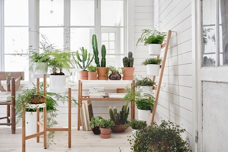 curare piante appartamento