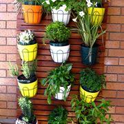 piante da balcone tutto l anno