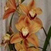 Concimi in appartamento speciali concimi in for Concime per orchidee