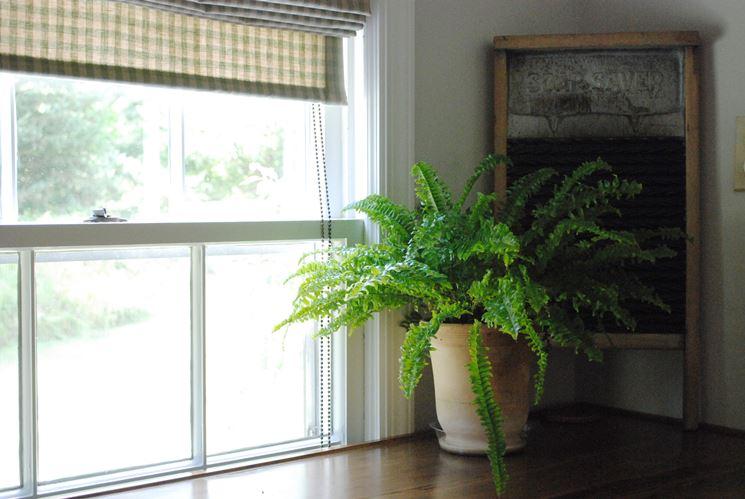 Felci in appartamento piante da interno felci in - La felce pianta ...