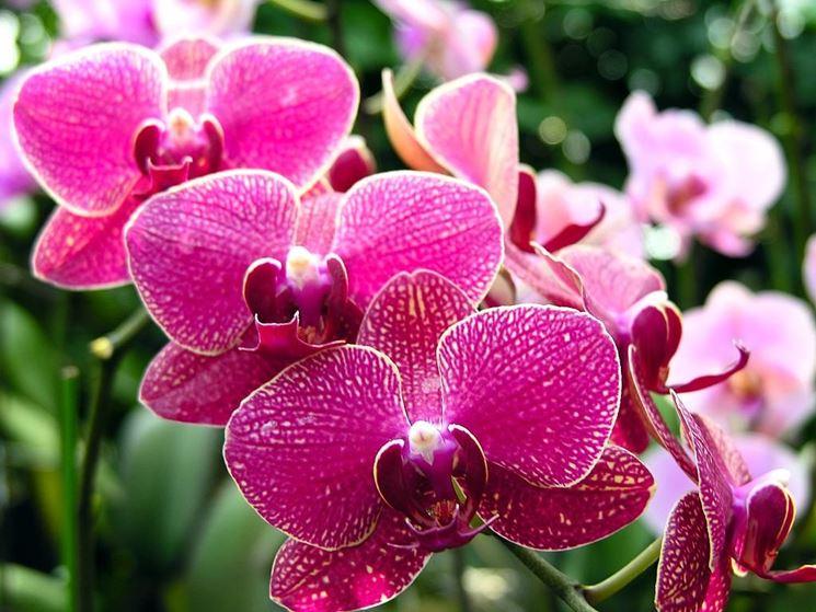 Orchidee piante da interno cura orchidee come curare - Orchidee da appartamento ...
