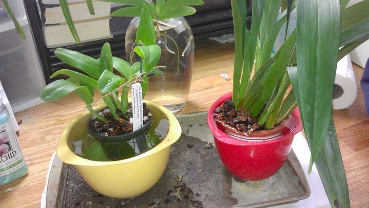 Orchidee Piante Da Interno Cura Orchidee E Curare
