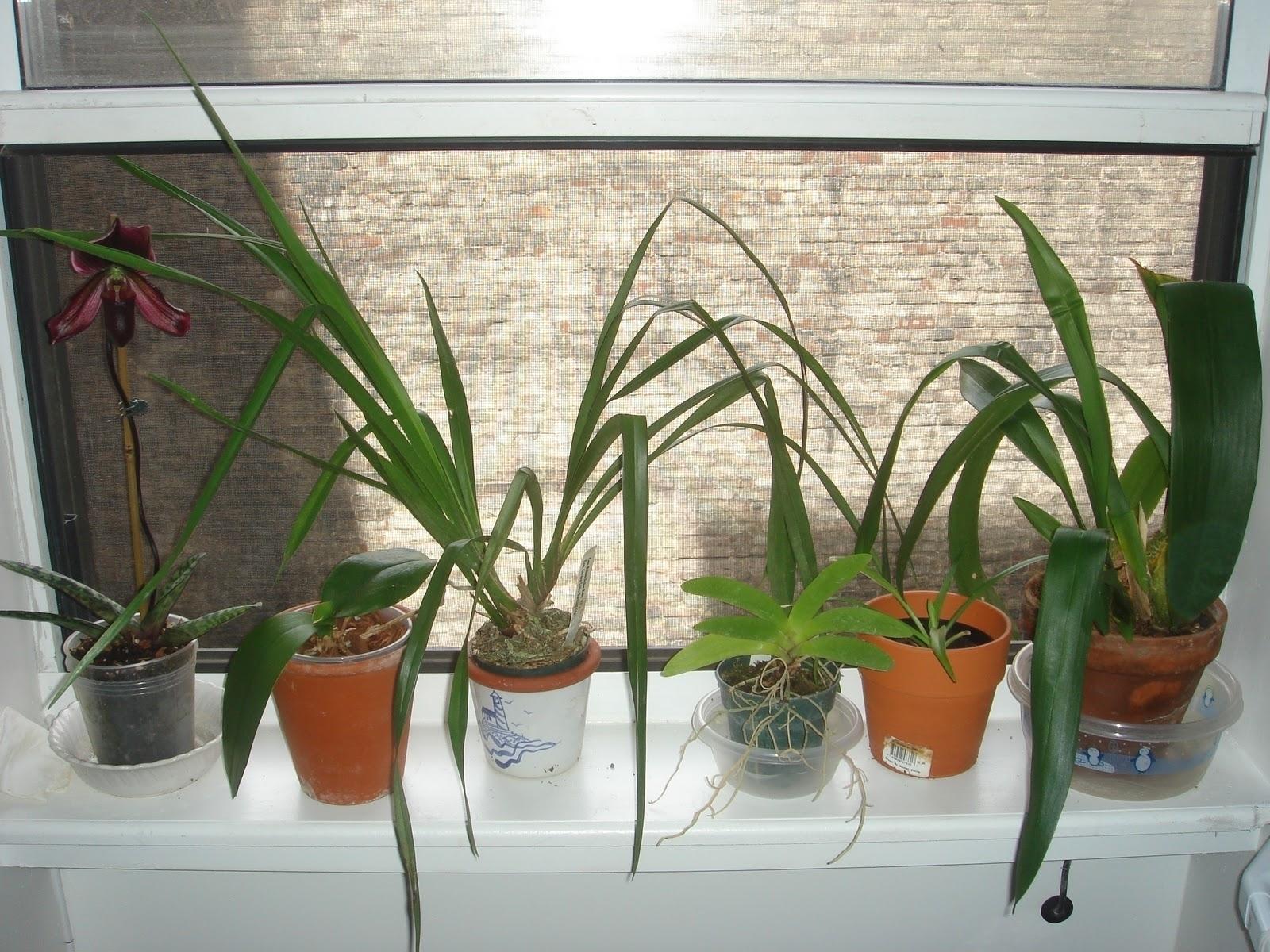 Piante Da Appartamento Orchidea.Orchidee Piante Da Interno Cura Orchidee Come Curare Le Orchidee