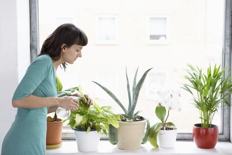 vaporizzare le piante