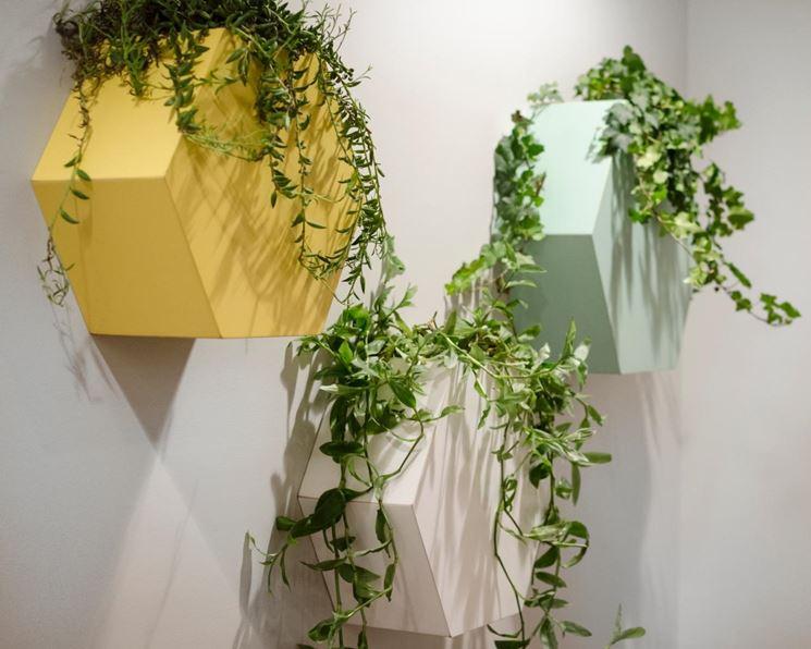 Rampicanti piante da interno rampicanti appartamento for Piante rampicanti