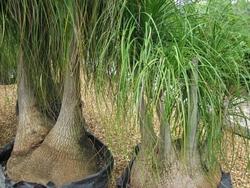 Prezzo della pianta mangiafumo