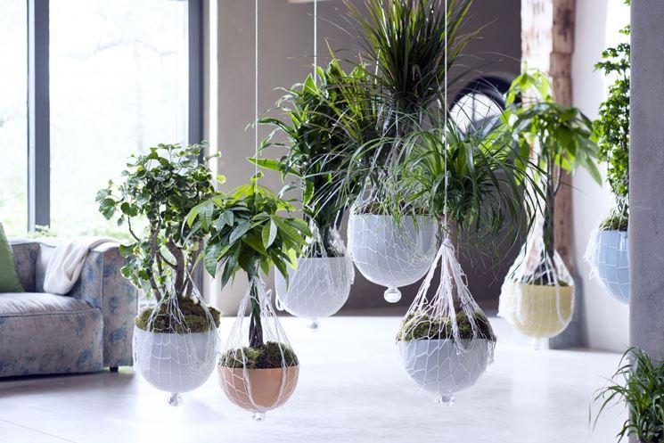 piante da appartamento appese