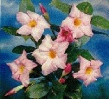 fiori Mandevilla splendens