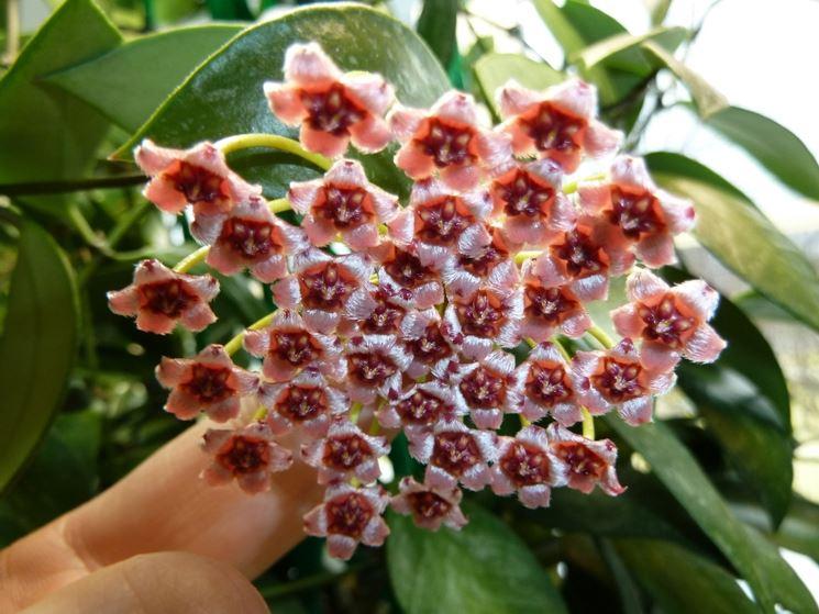 Fiore di porcellana