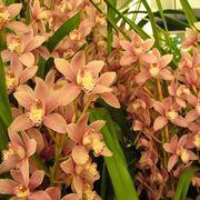 orchidee da esterno