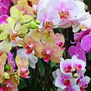 foto di orchidee