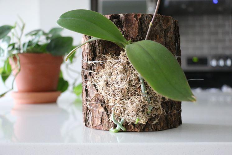 terreno orchidea