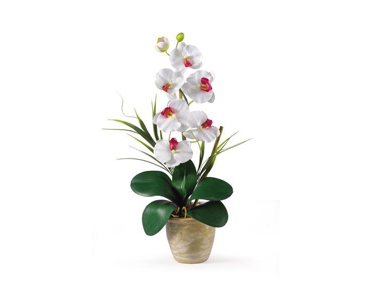 Innaffiature phalaenopsis