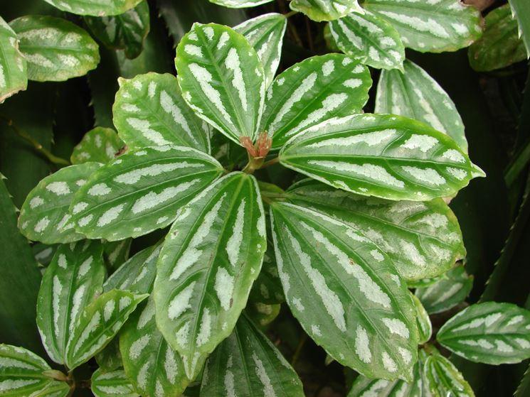 foglie pianta alluminio