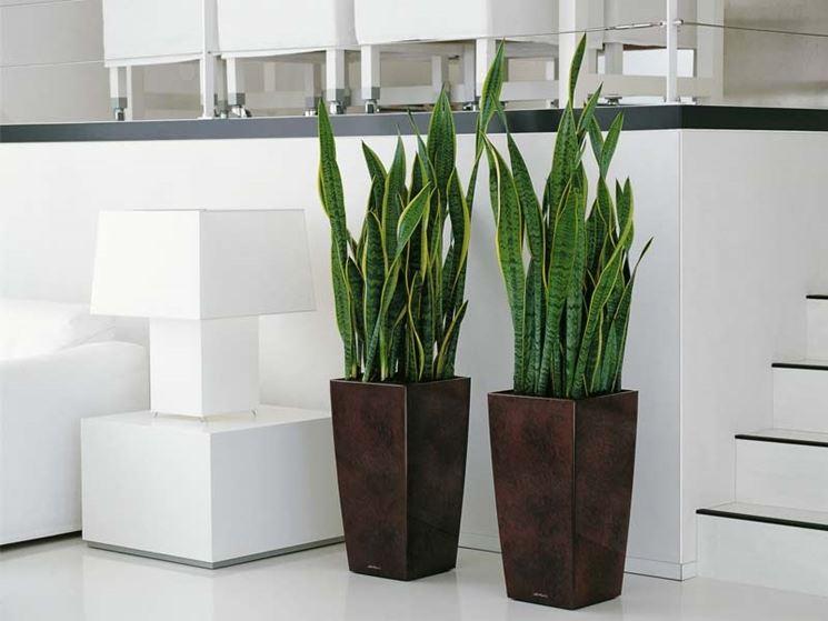 Illuminazione Artificiale Per Piante : Come scegliere i vasi per piante officina del verde verona