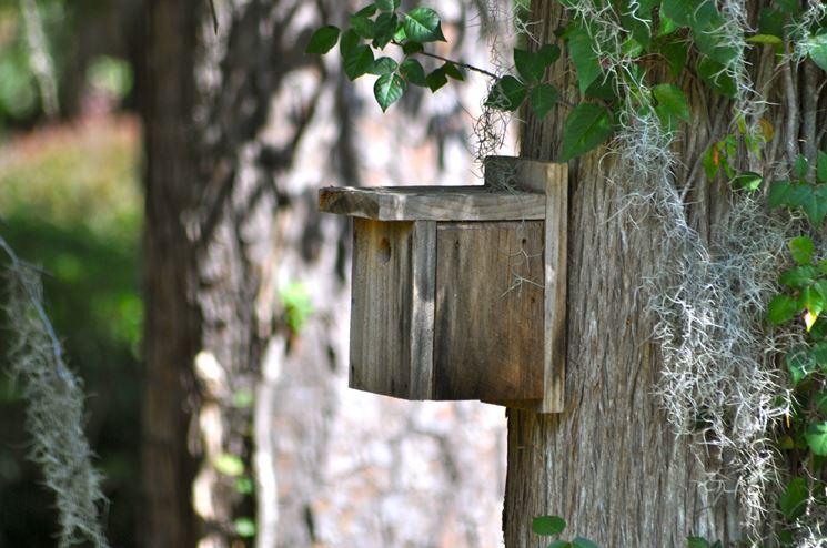posizionamento di una casetta per gli uccelli