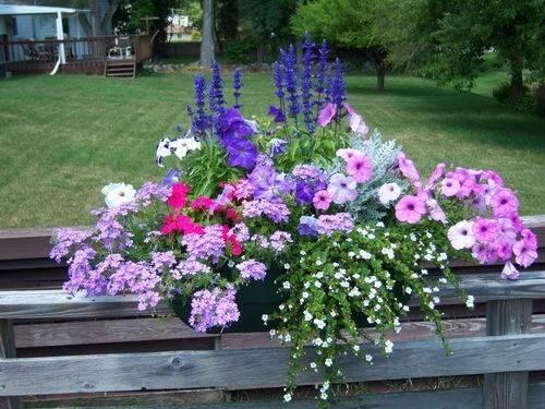 fiori per fioriere fioriere