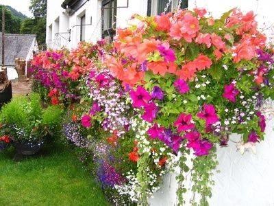 Fioriere Per Fiori ~ Fiori per fioriere fioriere