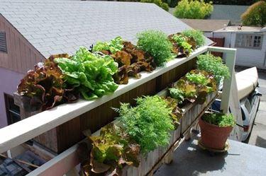 fioriere in balcone
