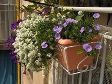 fioriere da balcone - Fioriere