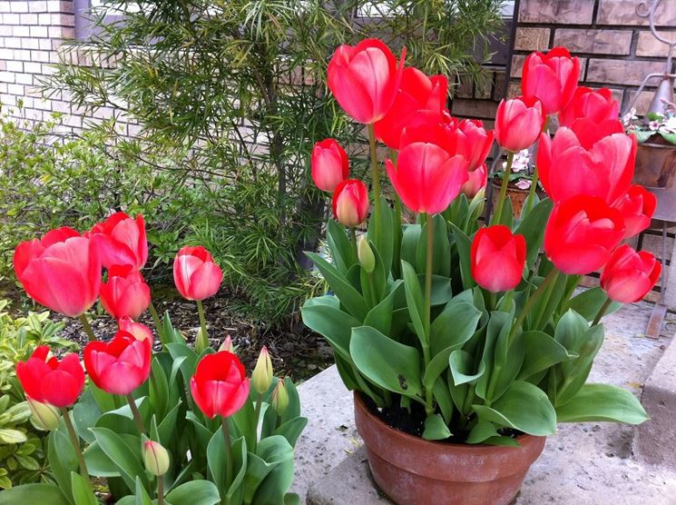 Piante da vaso fioriere for Piante da aiuola