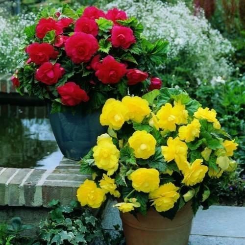 Piante da vaso fioriere for Piante ornamentali per esterno