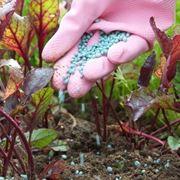 Concime per piante