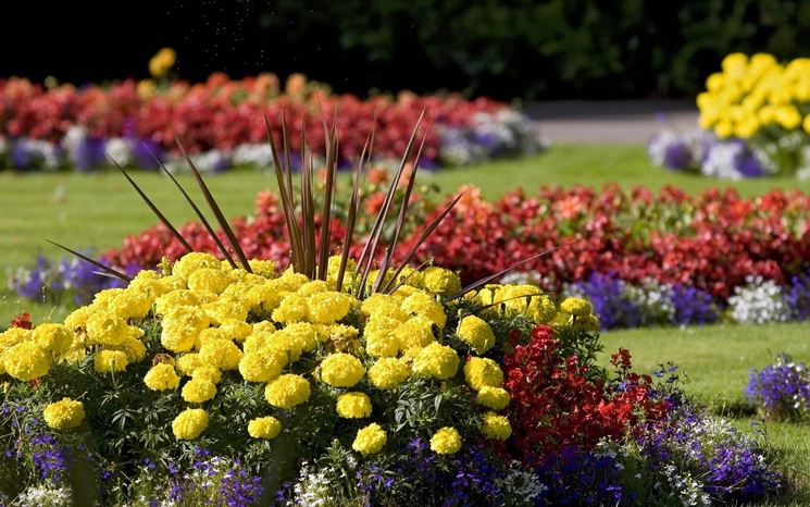 Fiori da giardino giardinaggio for Giardino fiori