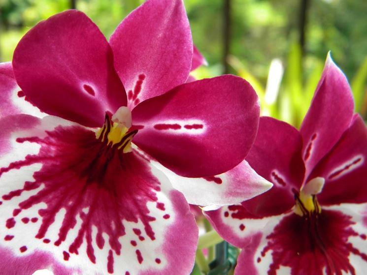 Giardinaggio e fiori giardinaggio for Tipi di fiori