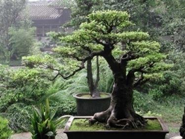 Giardini Zen Giardinaggio Giardini Zen Giardinaggio