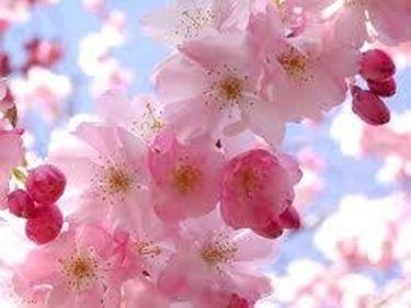 immagini fiori