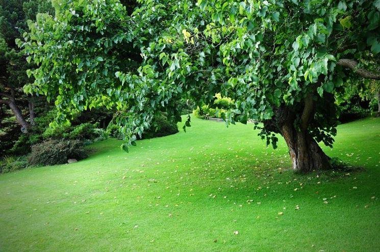 Prato da giardino giardinaggio - Erba da giardino resistente ...