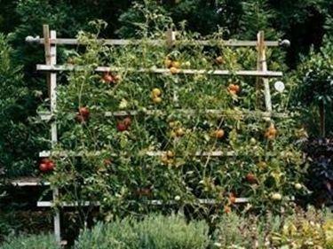 Grigliati giardino grigliati e frangivento grigliati for Divisori da giardino