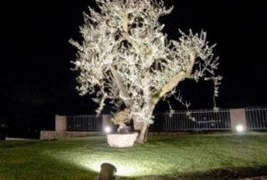 Casa moderna roma italy illuminazione esterna giardino - Vialetto giardino illuminato ...