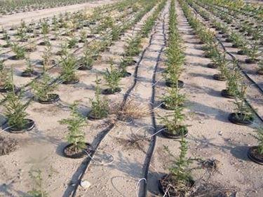 Un impianto di irrigazione a goccia