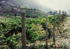 Impianto di irrigazione a goccia irrigazione impianto - Prezzo tubo irrigazione giardino ...