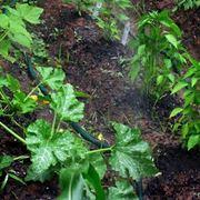 irrigazione a goccia fai da te
