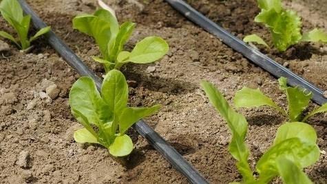 Irrigazione a goccia irrigazione - Prezzo tubo irrigazione giardino ...