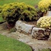 Aiuole in pietra progettazione giardino for Creare aiuole con sassi