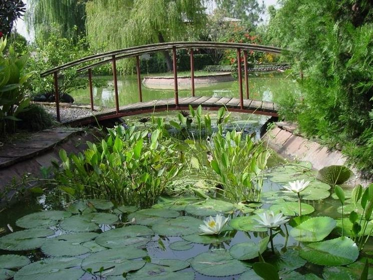 Giardini d acqua progettazione giardino for Piante ossigenanti per laghetto