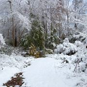 Giardini di inverno