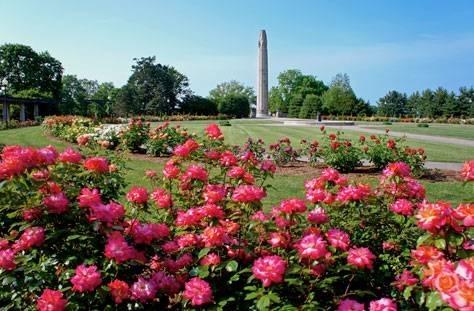Giardino di rose progettazione giardino