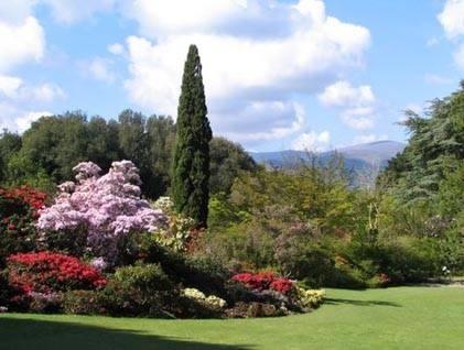 Giardino di rose progettazione giardino for Cespugli giardino