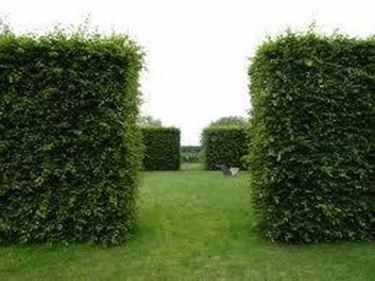 Idee giardino progettazione giardino - Idee progettazione giardino ...