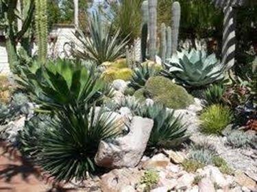 Progettazione giardini progettazione giardino for Arredo giardino piante