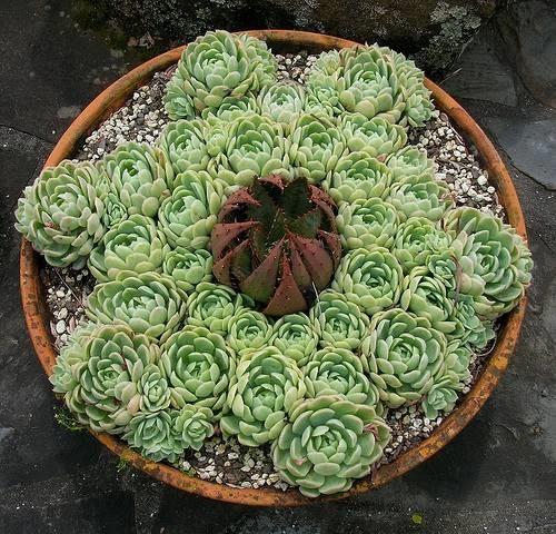 Pianta in vaso vasi - Vasi con piante grasse ...